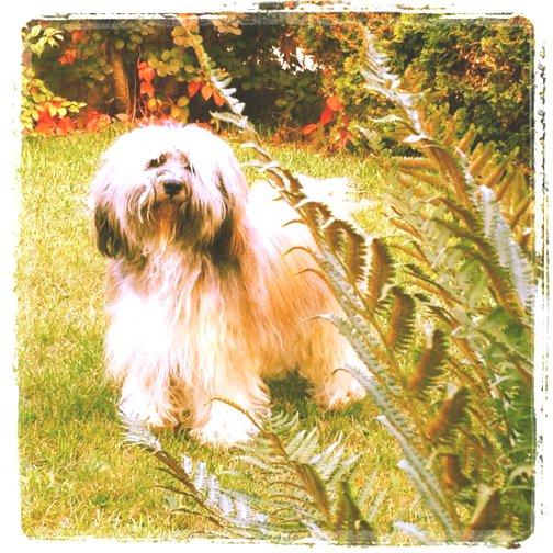 Unser Hund Dongyo